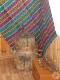 Новая выставка «Избранное. Из фондов музея». Ганцевичский районный краеведческий музей». Ганцевичи, 2017 г.